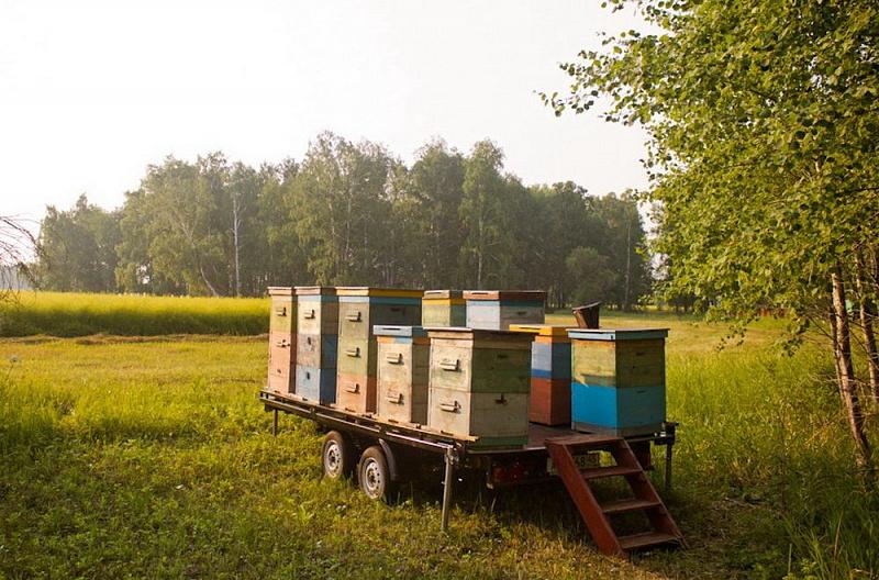 Платформа для кочевки пчел своими руками 6